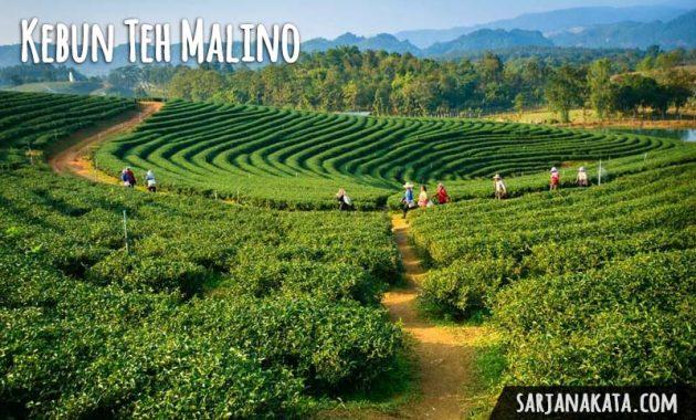 Kebun Teh Malino