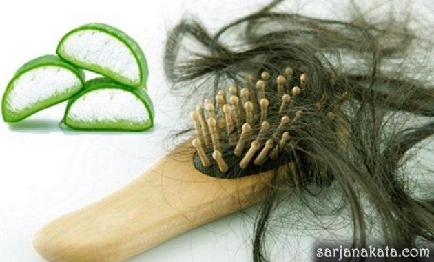 Manfaat Lidah Buaya Untuk Rambut Kokoh dan Sehat