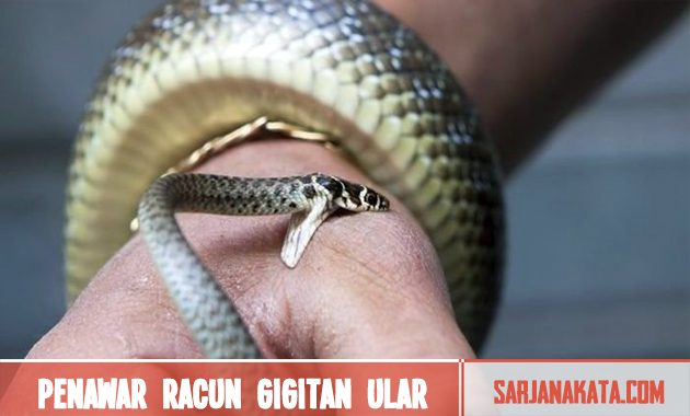 Penawar racun gigitan ular