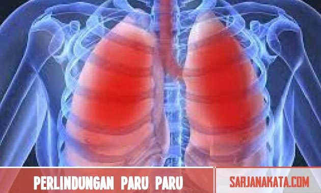 Memberikan perlindungan paru – paru